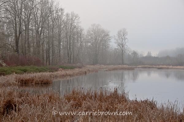Carrie Brown   Carnation, WA