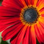 Carrie Brown | Flowers