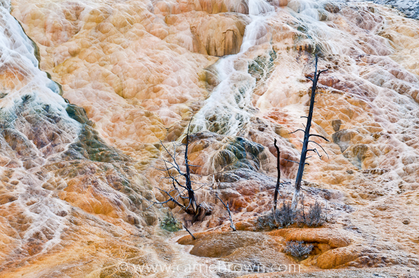 Mammoth Hot Springs, Yellowstone National Park by Carrie Brown.