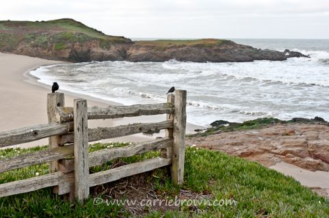 Set Yourself Some Boundaries | Carrie Brown