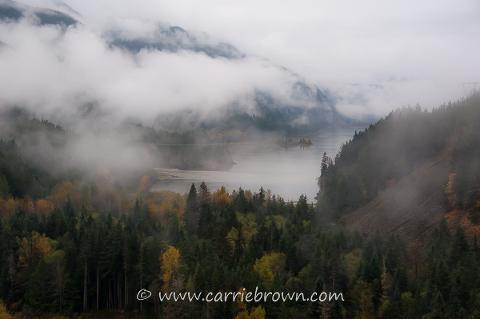 www.carriebrown.com